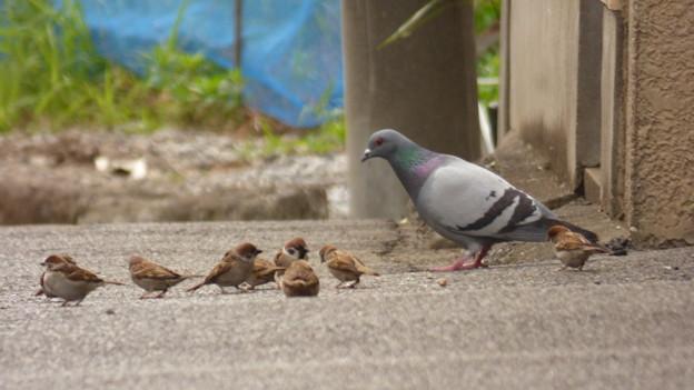 Photos: お鳩さんといっしょ