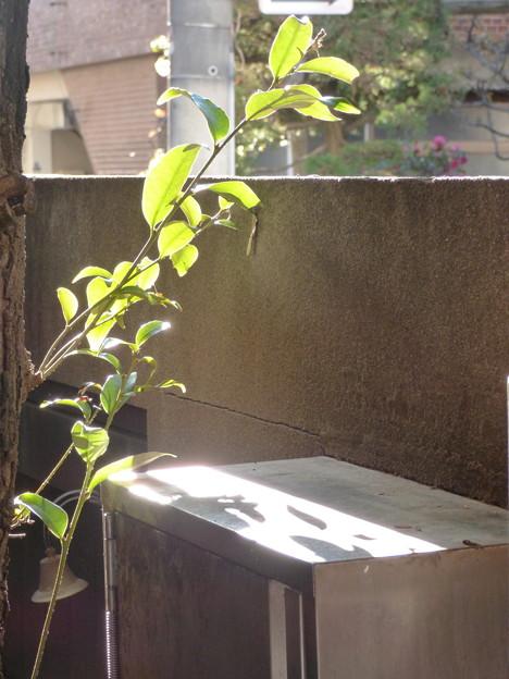 写真: 潤う光…自然体な「ライトアップ」