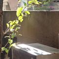 Photos: 潤う光…自然体な「ライトアップ」