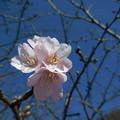 写真: 春よ来い