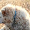 写真: 老犬の横顔