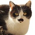 写真: ヒゲ猫