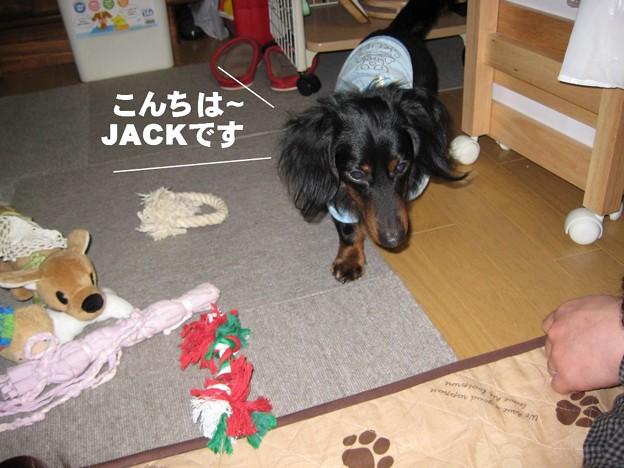 写真: jack08