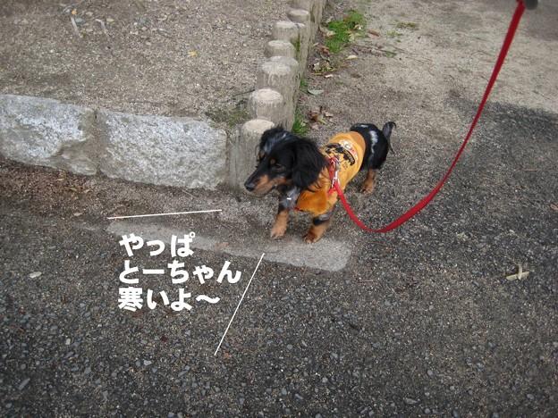 写真: senna0448