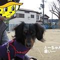 写真: senna0454