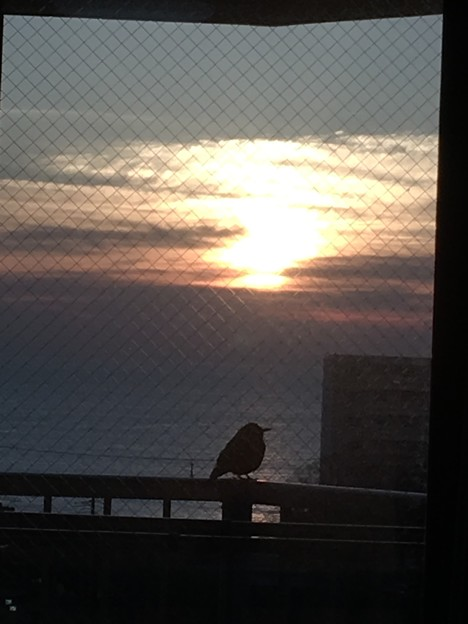 毎朝我が家で日の出を待つ奴