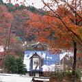 写真: 雪と紅葉