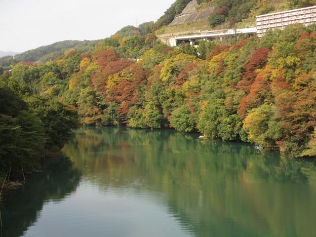 相模川の紅葉