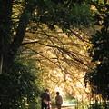 メタセコイアのトンネル