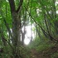 写真: 浅間尾根
