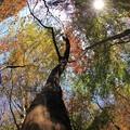 秋色の輝き♪