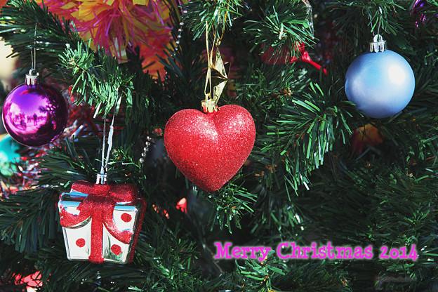 写真: クリスマスツリー 2014.12.07