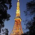 元旦東京タワー(2)