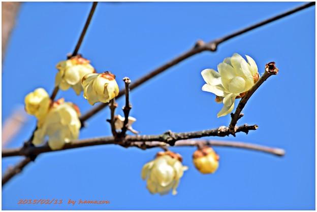 早春の訪れ2