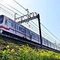 Photos: 春の三原色