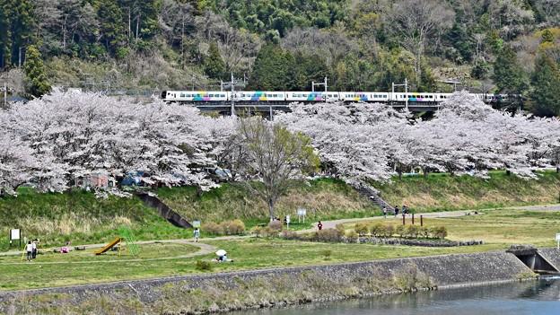 Photos: お花見特急