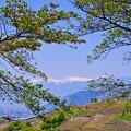 写真: 新緑と山々
