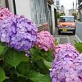 Photos: 紫陽花に染まる頃