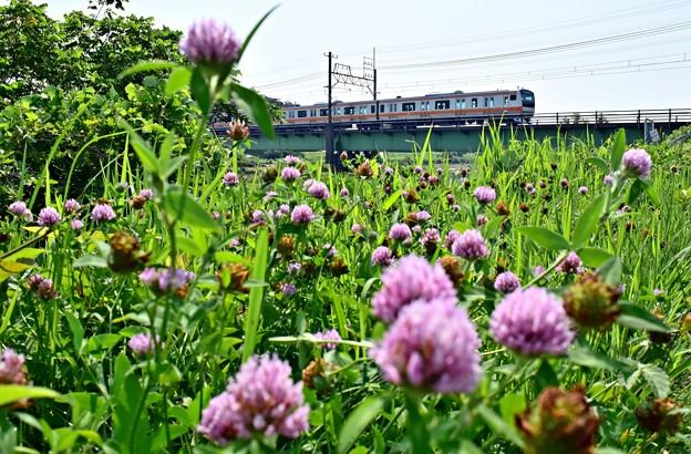 花咲く河川敷(1)
