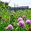 写真: 花咲く河川敷(1)
