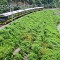写真: 緑夏の裏高尾(3)