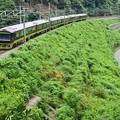 緑夏の裏高尾(3)