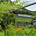 写真: 緑夏の裏高尾(4)