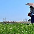 写真: 花咲く河川敷(4)