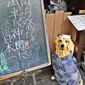 Photos: はち祭りだ!!