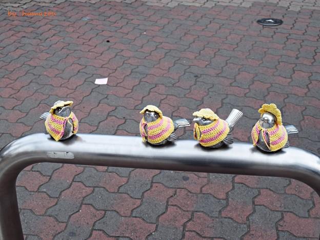 江ノ島の雀