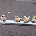 写真: 江ノ島の雀
