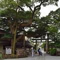 写真: 鎌倉御霊神社