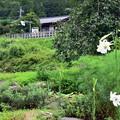 Photos: 山里の驛