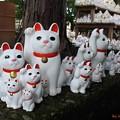 写真: 招福猫児(1)