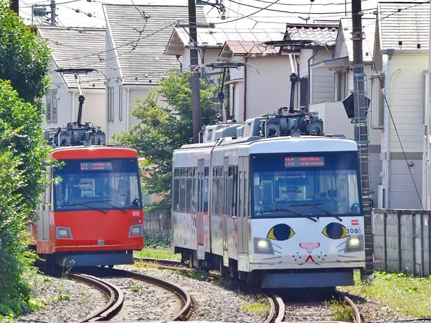 幸福の招き猫電車