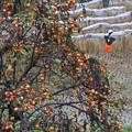 写真: 秋雨の山麓