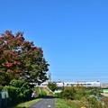 写真: 秋色沿線(7)