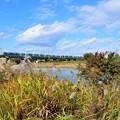 写真: 秋色沿線(10)