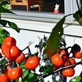 写真: にゃんこ&花茄子