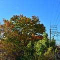 写真: 秋色沿線(16)