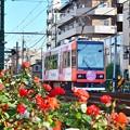 Photos: 秋色沿線(22)