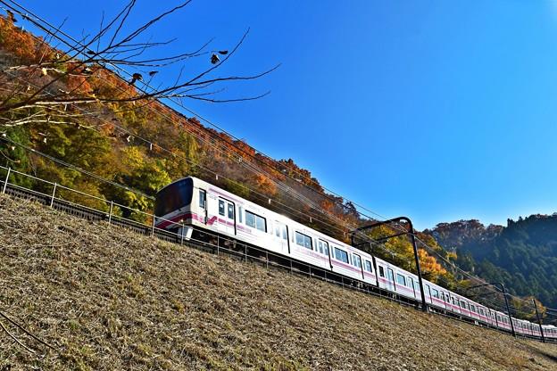 西陽に輝く紅葉電車