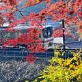 Photos: 紅と黄