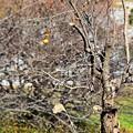 写真: 秋の忘れ物