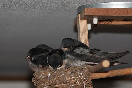 巣の中で迎えた朝