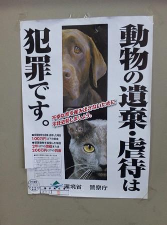 動物の遺棄虐待は犯罪です