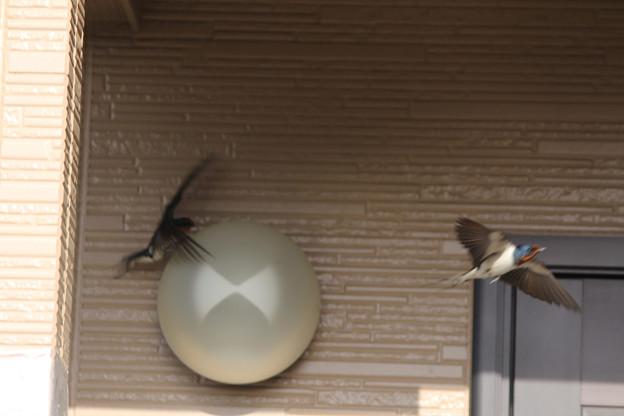 写真: 巣、かくにーん