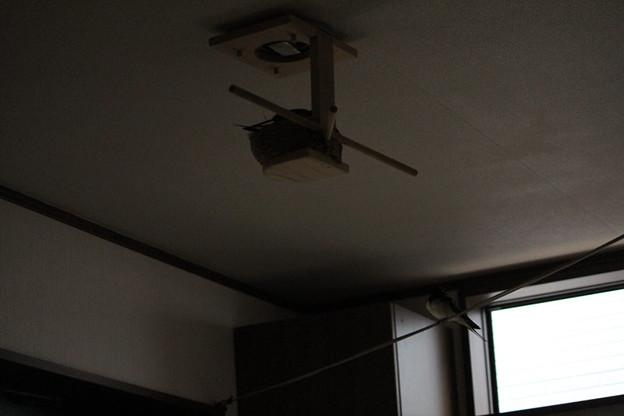 写真: 巣の点検