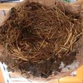 写真: 中組の巣