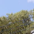 写真: 電線で